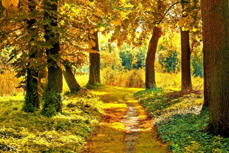 Nature Landscapes Trees Forest Path Wallpaper 1920x1280 768x512