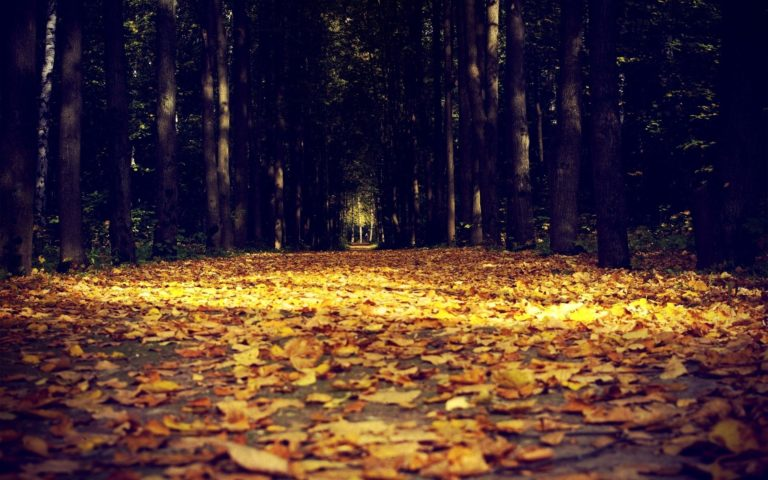 Nature Leaves Trees Forests Autumn Wallpaper 1920x1200 768x480