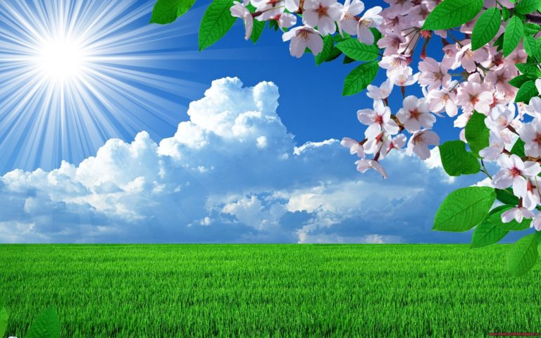 Nature Spring Flowers Landscapes Wallpaper 2880x1800 768x480