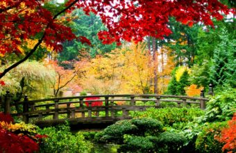 Nature Trees Autumn Colorful Garden Wallpaper 2560x1440 340x220
