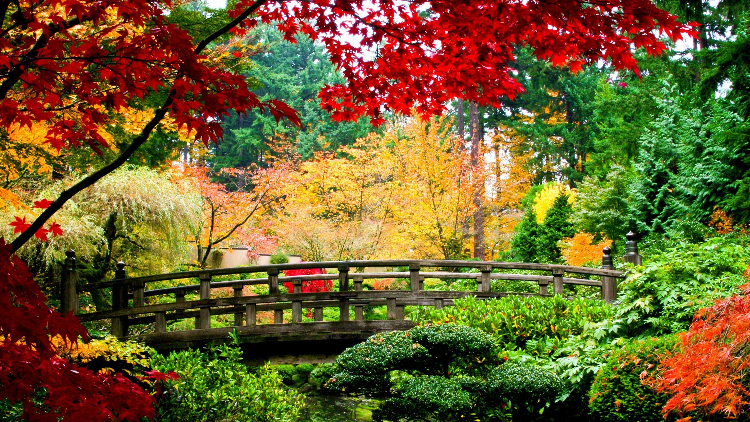 Nature Trees Autumn Colorful Garden Wallpaper [2560x1440]