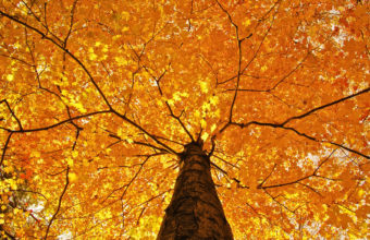 Nature Trees Leaves Color Yellow Autumn Wallpaper 1920x1080 340x220