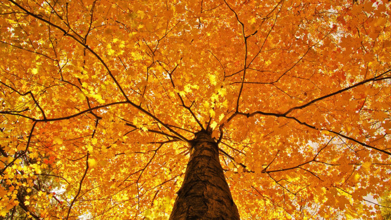 Nature Trees Leaves Color Yellow Autumn Wallpaper 1920x1080 768x432