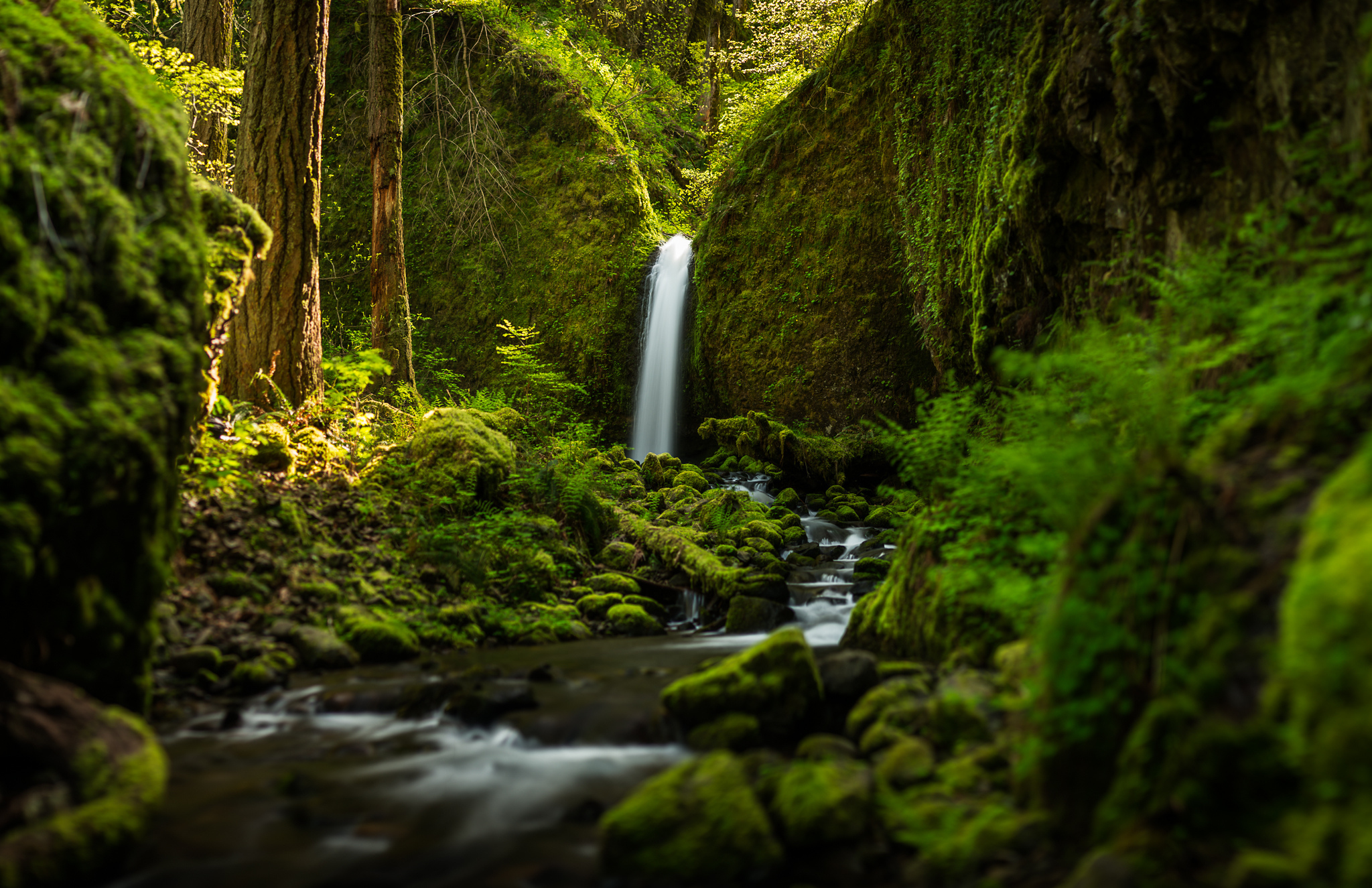 Oregon Wallpapers Hd: Oregon Waterfall Forest River Mood Wallpaper