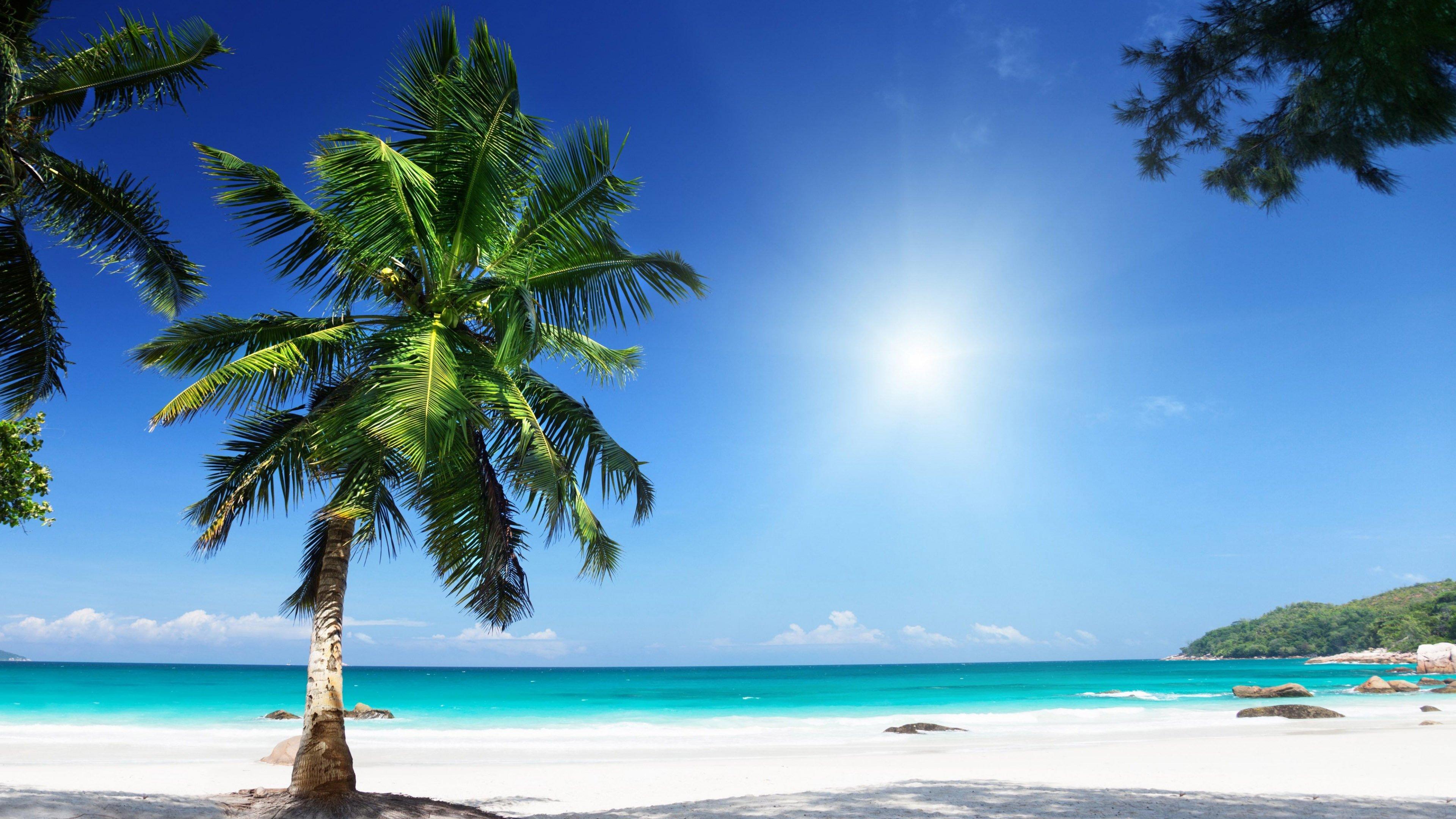 Palm tree 4k ultra hd wallpaper 3840x2160 - Free palm tree screensavers ...