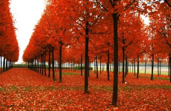 Park Trees Autumn Wallpaper 1920x1200 340x220