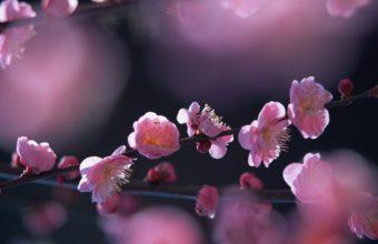 Pink Flowers In Springtime Wallpaper 2560x1600 340x220