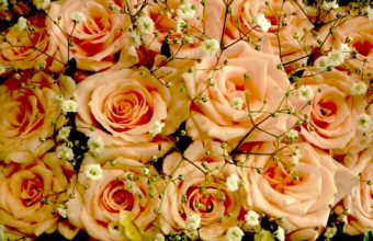 Pink Roses Party Wallpaper 1920x1200 340x220