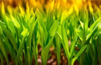 Plant Wallpaper 18 1920x1200 340x220