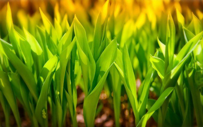 Plant Wallpaper 18 1920x1200 768x480