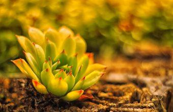 Plant Wallpaper 24 1920x1200 340x220