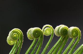 Plant Wallpaper 31 2048x1366 340x220
