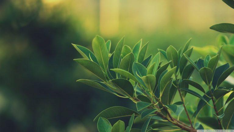 Plant Wallpaper 32 1366x768 768x432