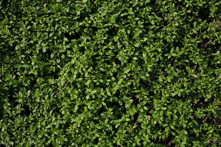 Plant Wallpaper 33 3000x2000 768x512