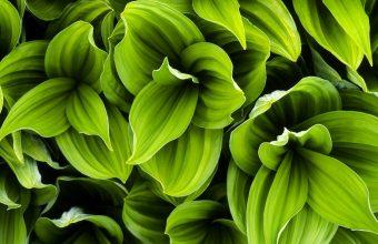 Plant Wallpaper 38 1920x1080 340x220