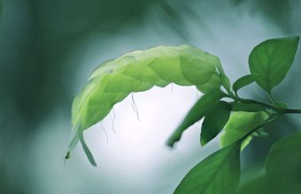 Plant Wallpaper 39 2048x1365 340x220