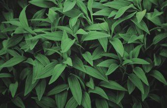 Plant Wallpaper 42 1920x1200 340x220