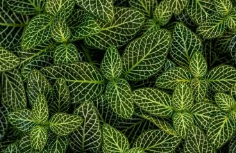 Plant Wallpaper 46 3840x2160 340x220