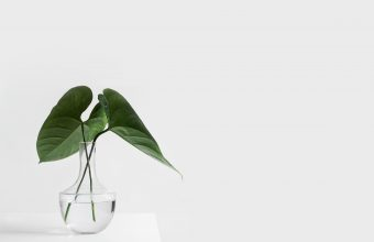 Plant Wallpaper 49 4700x3200 340x220