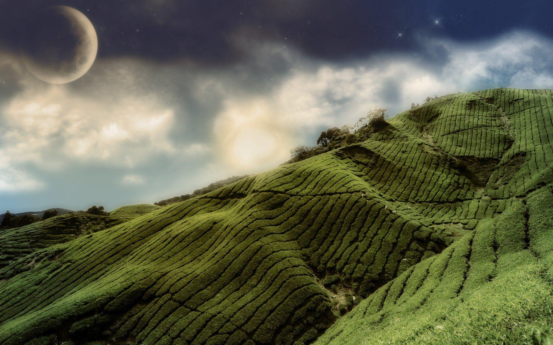 холмы плантации без смс