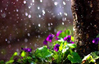 Rain Drops Flower Spring Mood Bokeh Wallpaper 1920x1200 340x220