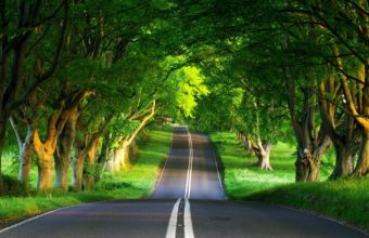 Road Asphalt Trees Wallpaper 1920x1440 340x220