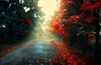 Road Autumn Leaves Wallpaper 1350x900 340x220