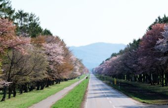 Road Gardens Japan Wallpaper 1440x900 340x220