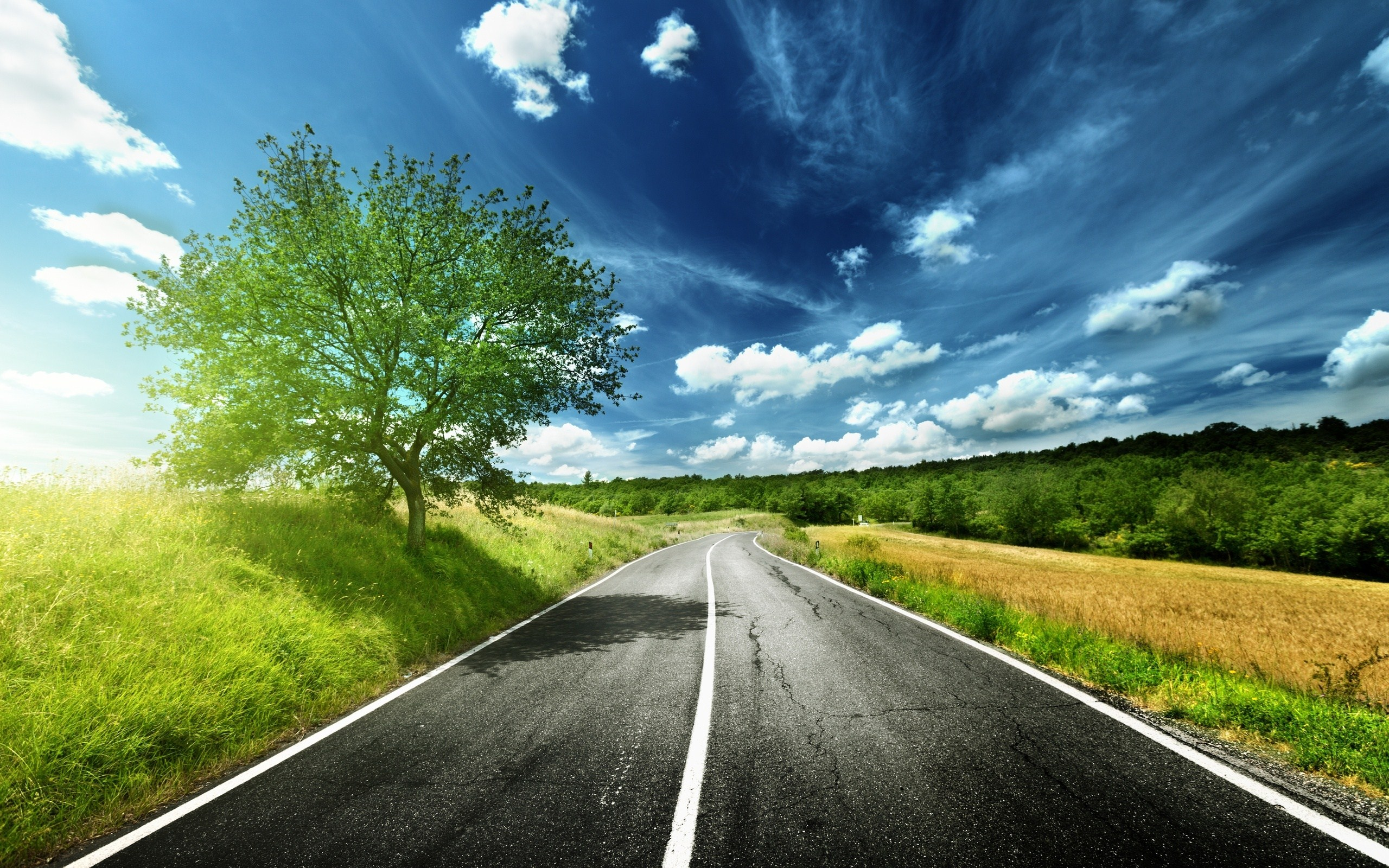 Road Line Asphalt Wallpaper 2560x1600