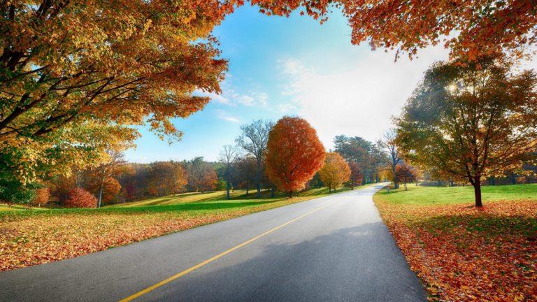 Road Markings Autumn Wallpaper 1440x810 768x432