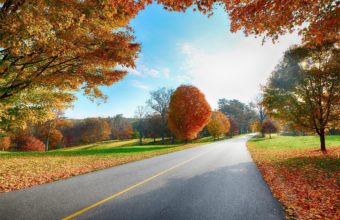 Road Markings Autumn Wallpaper 2560x1440 340x220