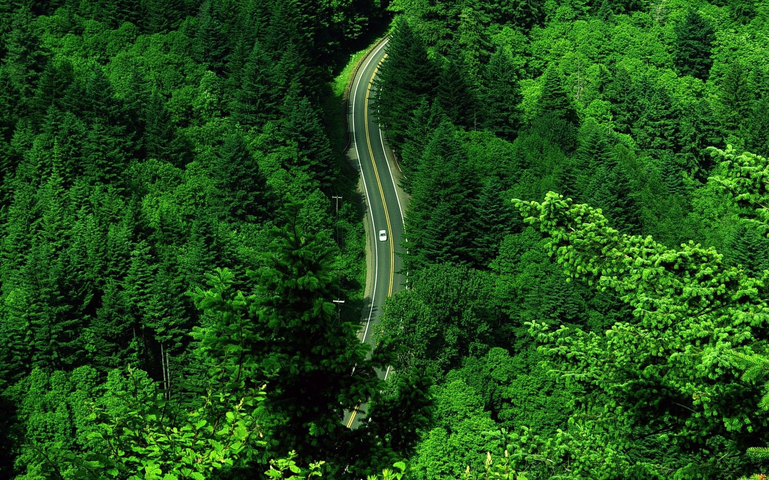 road top view grass wallpaper 2560x1600