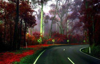 Road Turn Trees Wallpaper 1440x900 340x220