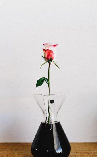 Rose Phone Wallpaper 1080x2340 14 340x550