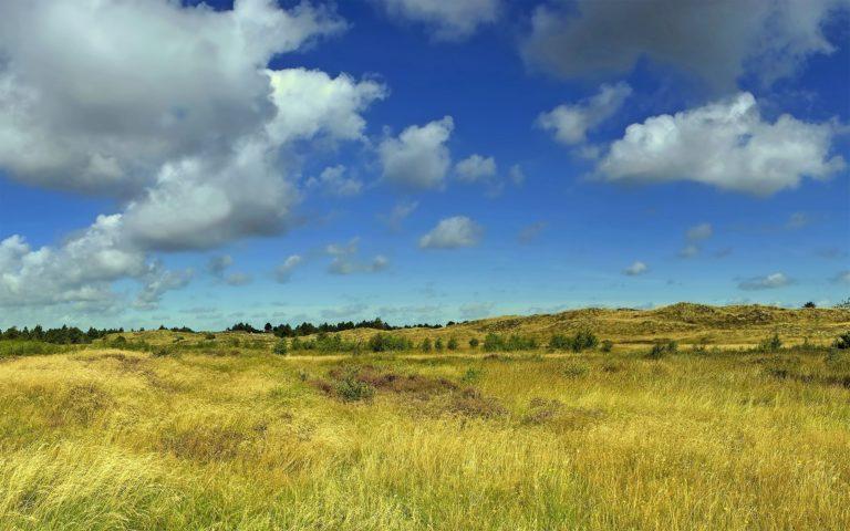 Sky Summer Field Grass Wallpaper 2560x1600 768x480