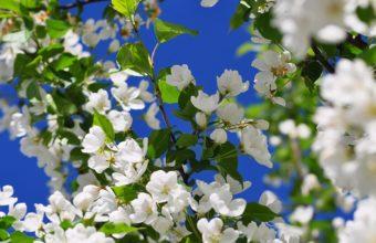 Spring Branch Flower Wallpaper 2560x1600 340x220