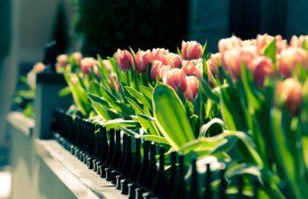 Spring Gathering Wallpaper 2560x1600 340x220