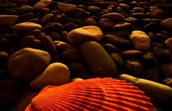 Sunset Beach iPhone 7 Wallpaper 750x1334 340x220