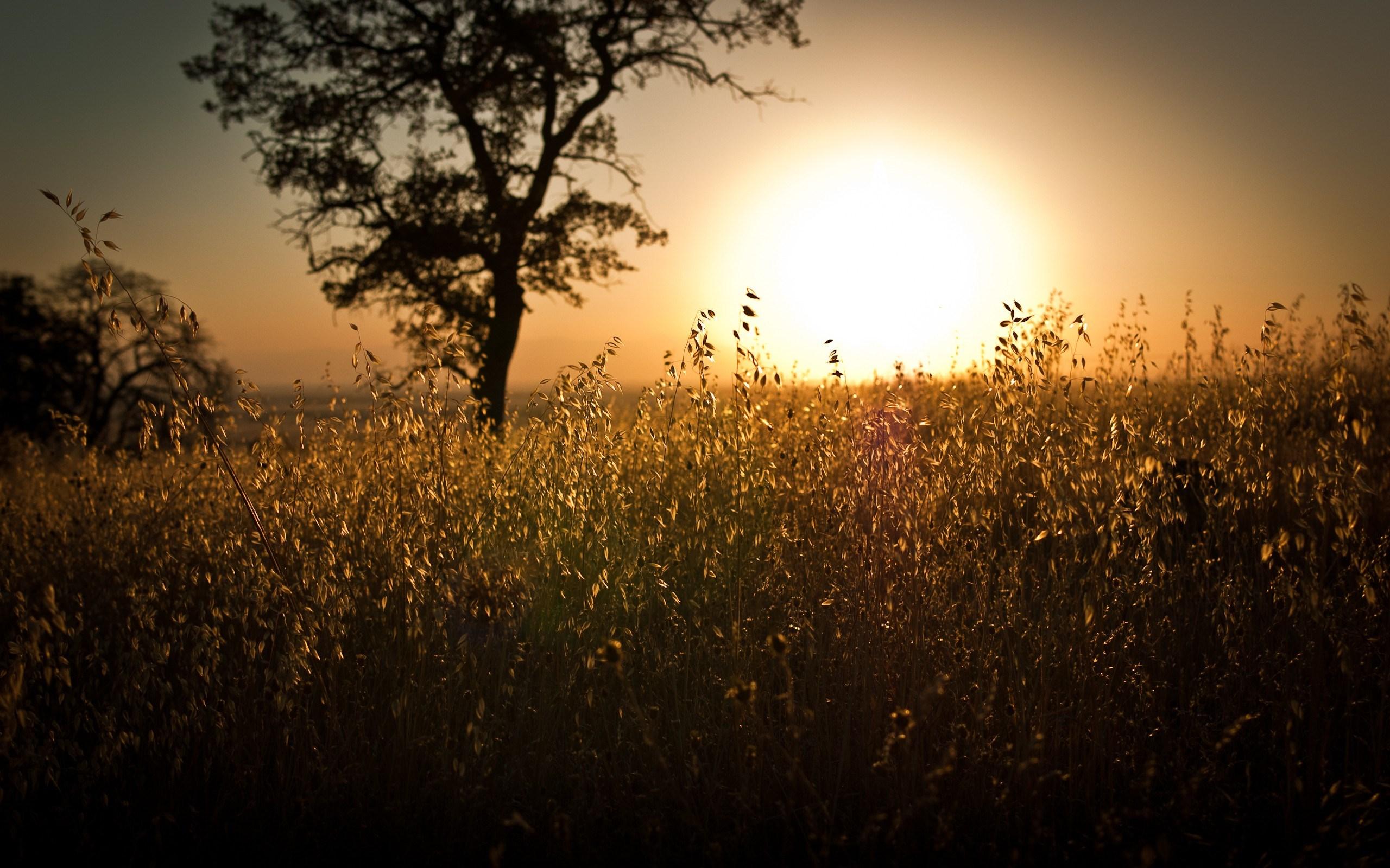 Sunset landscapes nature sun wallpaper 2560x1600 - Nature wallpaper 2560x1600 ...