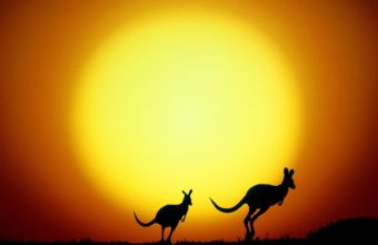 The Kangaroo Hop Australia Wallpaper 1600x1200 340x220