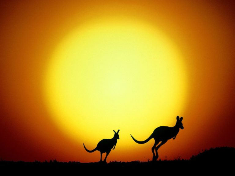 The Kangaroo Hop Australia Wallpaper 1600x1200 768x576
