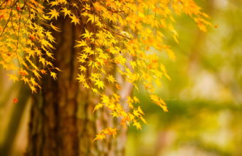 Tree Autumn Leaves Nature Bokeh Wallpaper 1920x1200 340x220