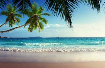 Tropical 4K Ultra HD Wallpaper 3840x2160 340x220