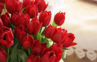 Tulip Flowers Bouquet Wallpaper 1350x900 340x220