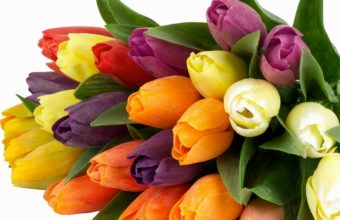 Tulips Bunch Bright Wallpaper 1200x900 340x220