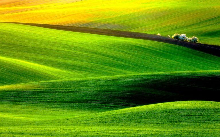 Velvet Field Wallpaper 1920x1200 768x480