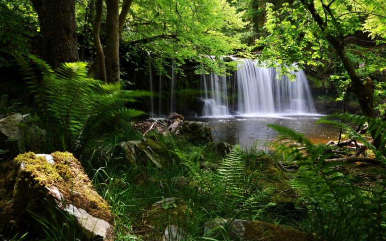 Waterfall Grass Nature Wallpaper 768x480