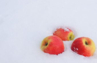 Winter Snow Apples Wallpaper 1680x1050 340x220
