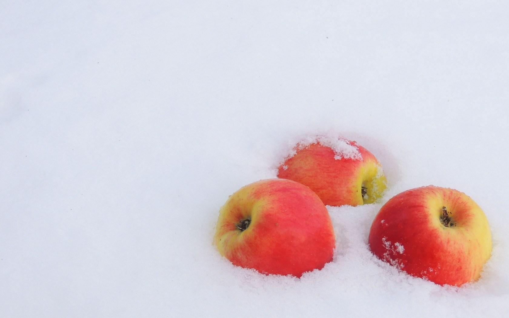 winter snow apples wallpaper [1680x1050]