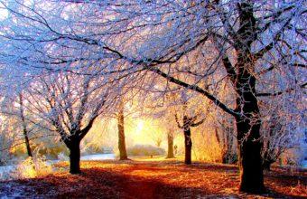 Winter Sunlight Wallpaper 1920x1200 340x220
